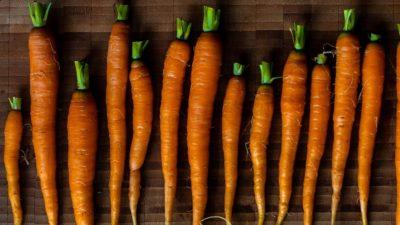 Carrots bright