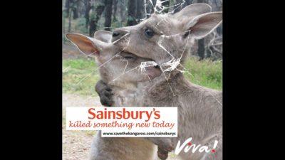 Sainsbury's kangaroo