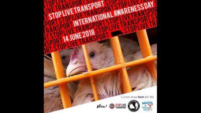 Live animals transport