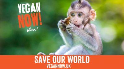 Vegan Now - Monkey