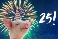 Viva!'s 25th Anniversary!