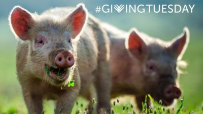 Help Us Fundraise For Animals This #GivingTuesday