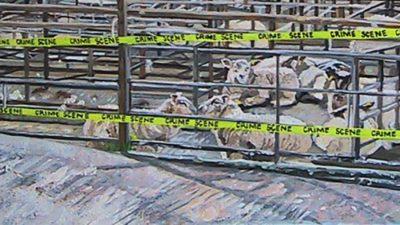 Jadwiga Kindermann COMFORT crime scene