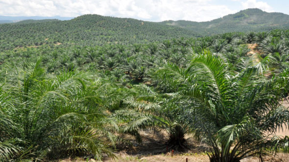 Palm oil – What You Need to Know