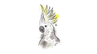 Rebecca Christy parrot