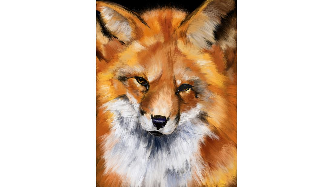 Sarah Curtis Fox Print