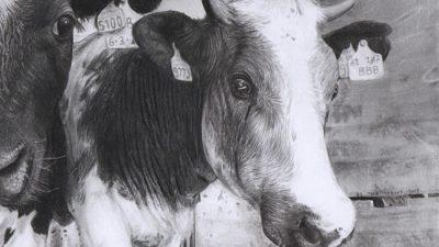 David Brown Cow