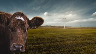 Meat and Dairy Is Driving Climate Change, Say UN Experts