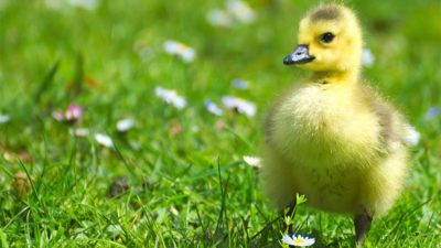 7 Tips to Help Animals in the Midst of Coronavirus