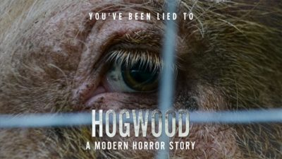 Hogwood banner image