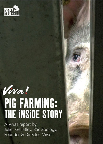 Pig farming: The inside story