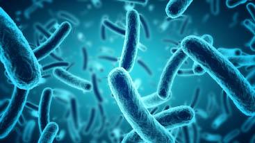 Bacteria VS Virus