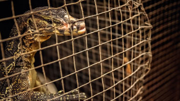 Has the wild animal trade be banned?