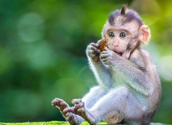 Monkey picture - Vegan now