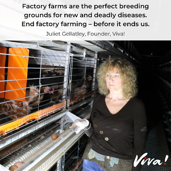 Factory farming diseases