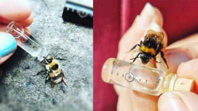 BeeVive bee