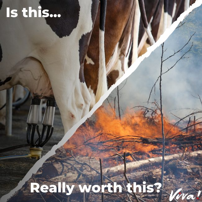 Is dairy really worth deforestation?
