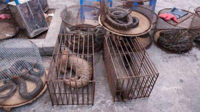 Wild animals market