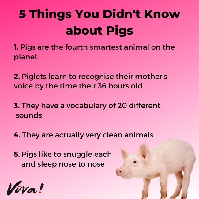 5 things you didn't know about pigs