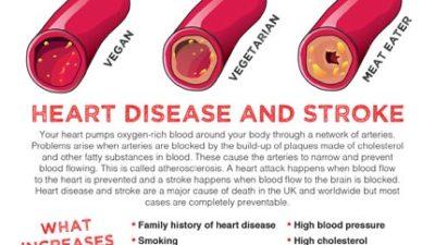 Mini fact sheet: Heart health