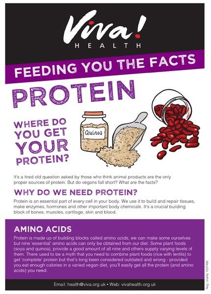 Mini fact sheet: Protein