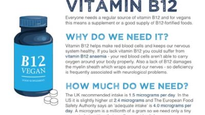 Mini fact sheet: Vitamin B12