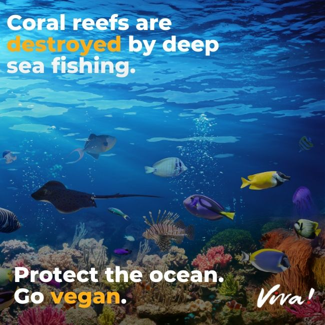 Beautiful and vibrant coral reefs