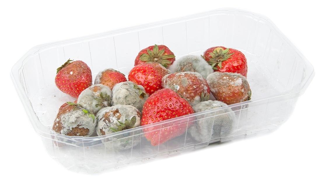 Rotten strawberries