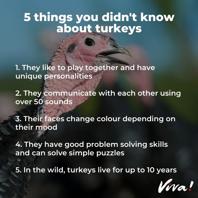 5 Things You Didn't Know about turkeys