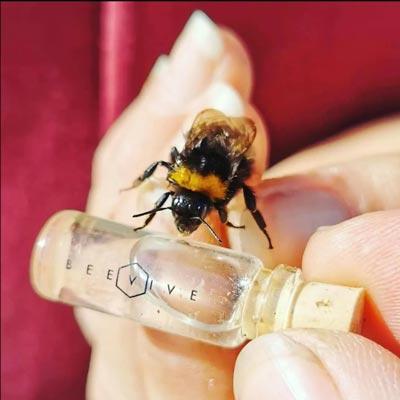 Bee Revival Kit