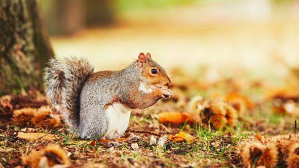 squirrel in autumn scene