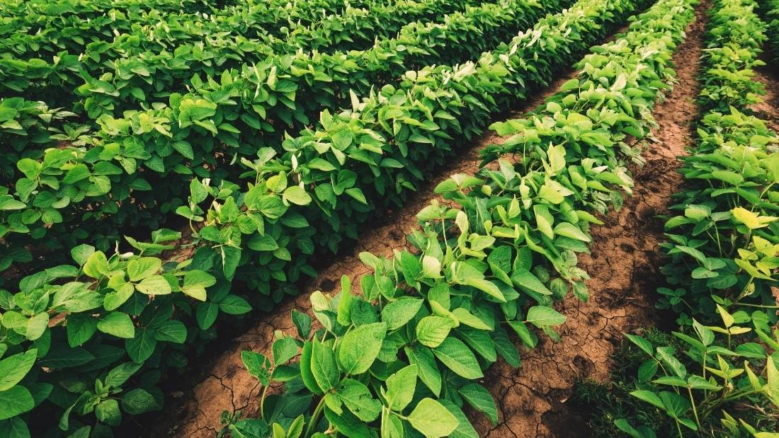 crops self sufficiency