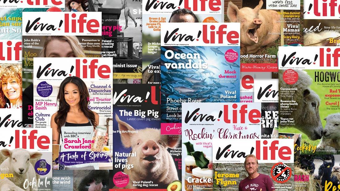 Header image Viva!Life