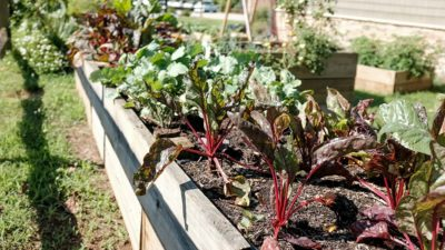 Jonathan Hanna vegan garden