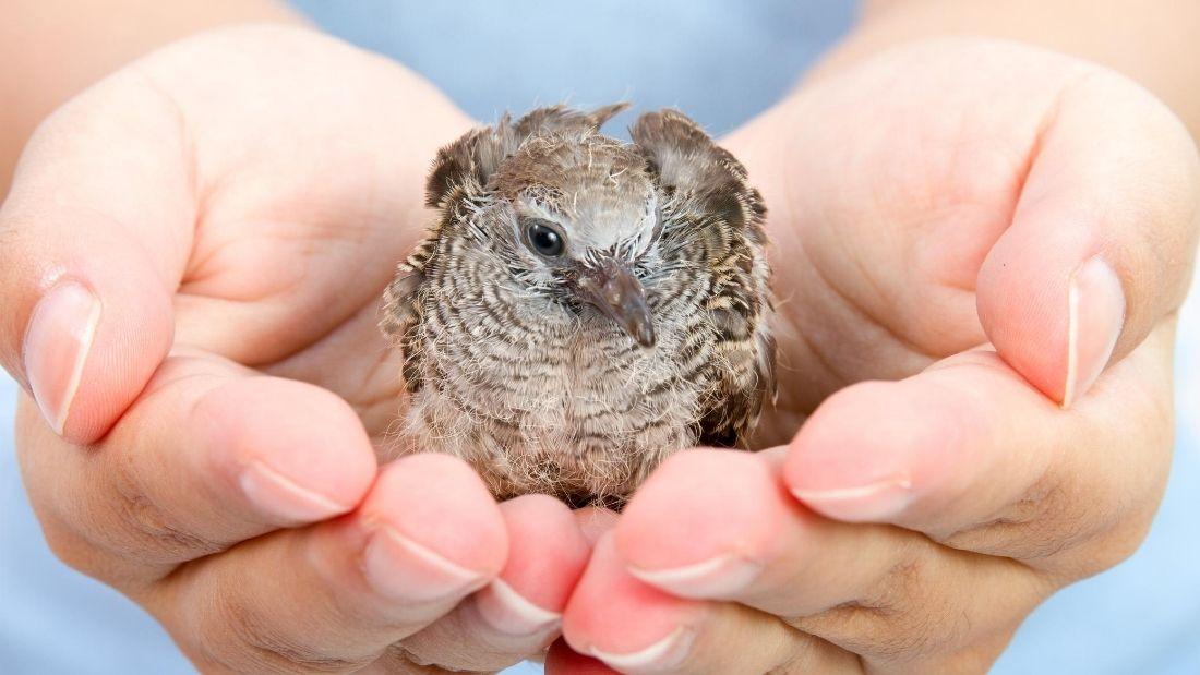 holding bird in hands wildlife rescue
