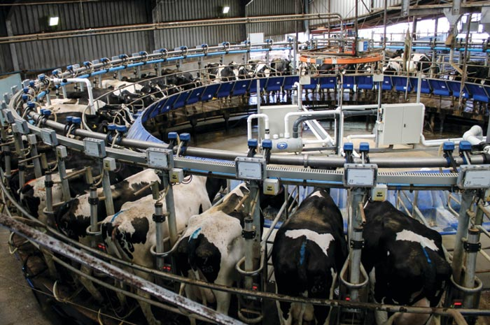 3 in 4 cows