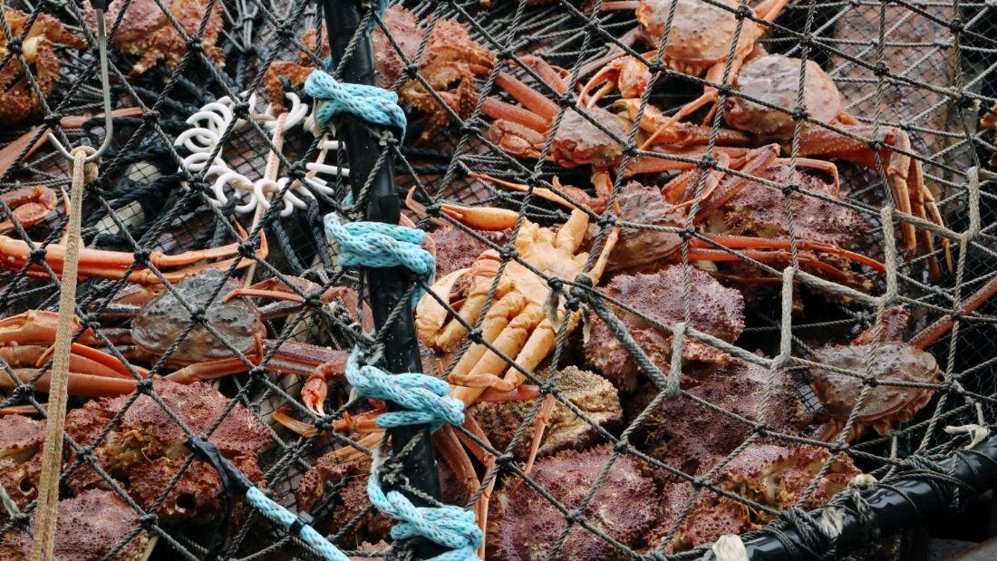 Captured crabs