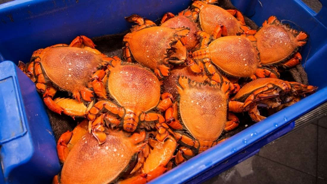 Crabs transported in box