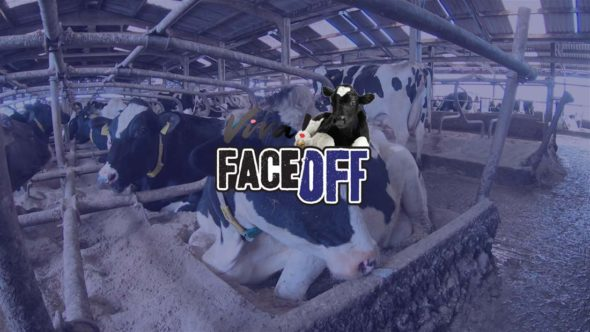 Dairy farm banner