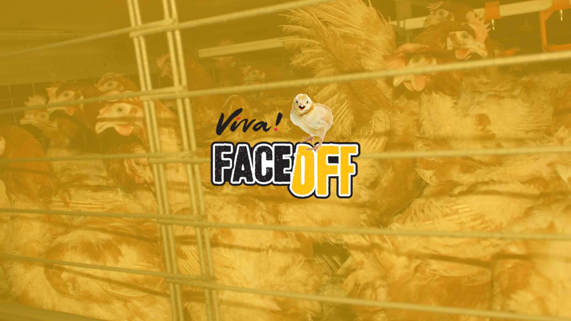 face off eggs banner