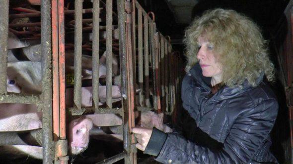 Juliet and pig