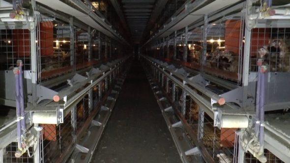 Enriched cage unit