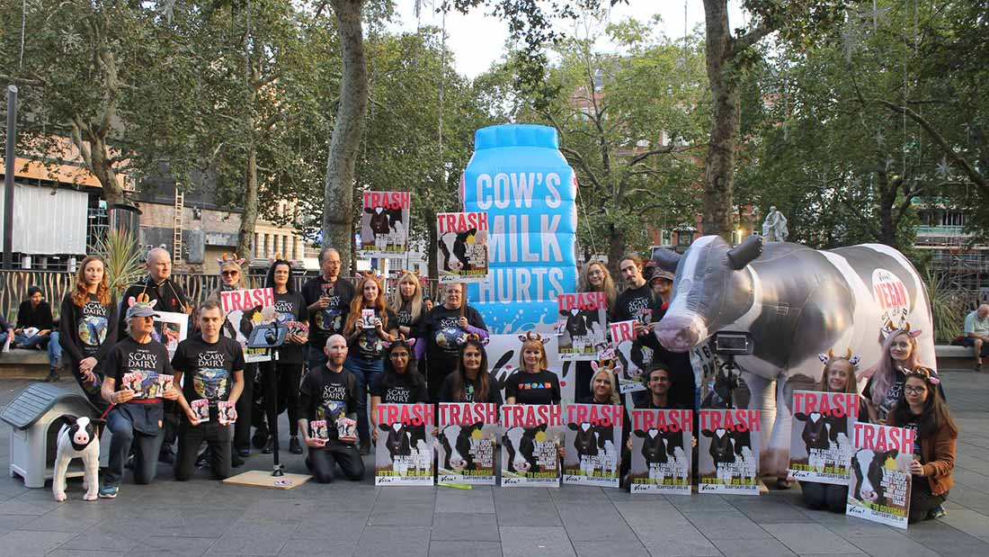 Cows milk hurt demo