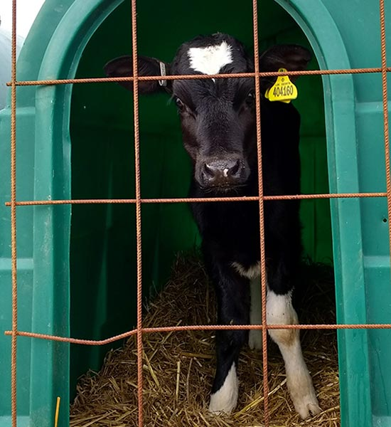 The Dairy Industry