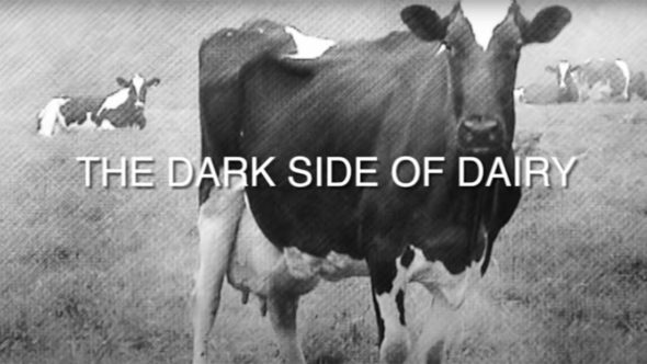 Dark side of dairy