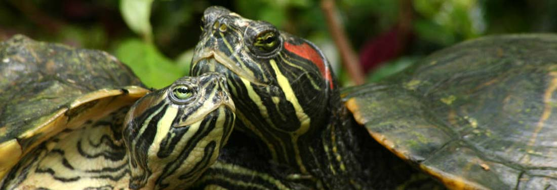 Turtles 2015 review