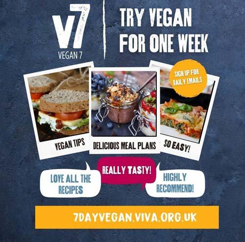 v7 meal promo square