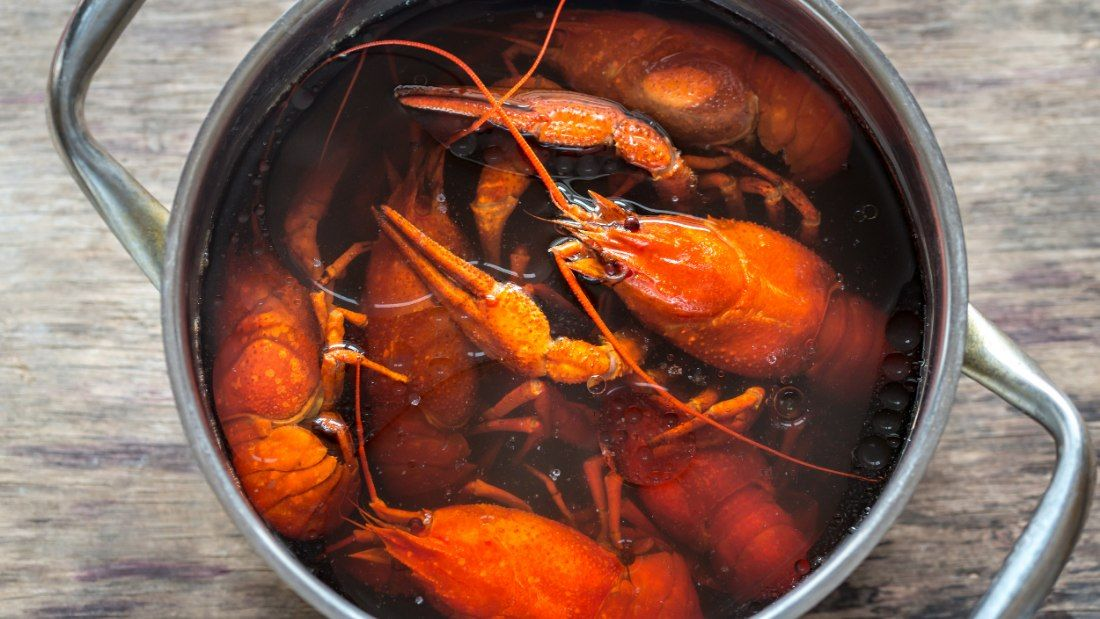 lobsters being boiled in pot