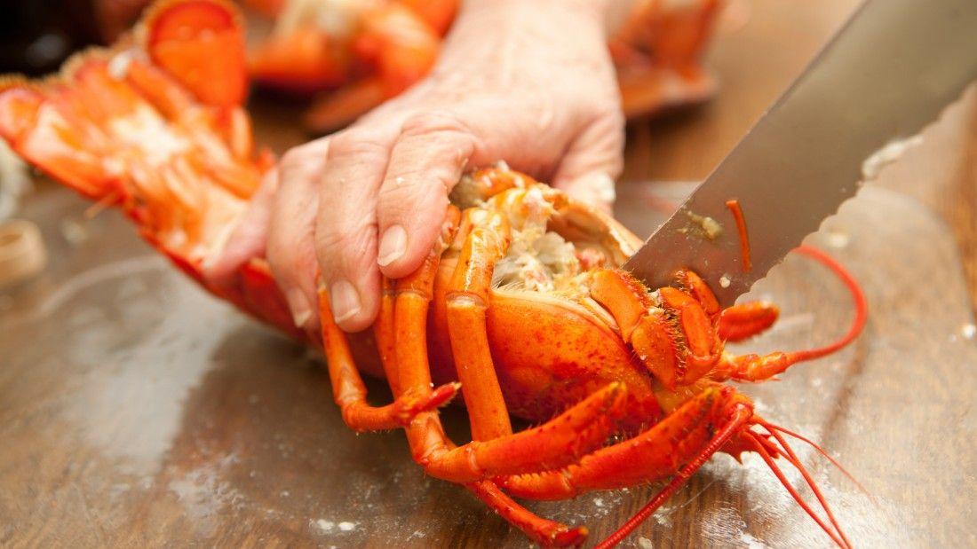 lobster being slaughtered