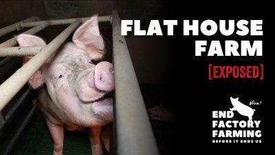 flat house farm banner